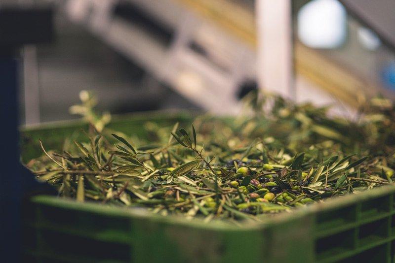 Olio extravergine d'oliva della Basilicata